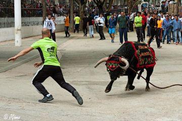 Cinco fiestas andaluzas crueles con los animales