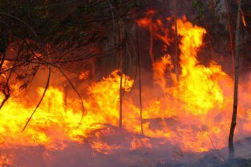 El 96% de los incendios forestales se podrían evitar. ¿Sabes cómo?