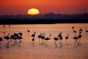 Andalucía #AlNatural: la ecología como bandera
