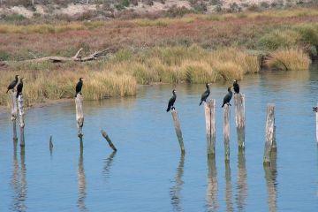 Doñana, en la incertidumbre