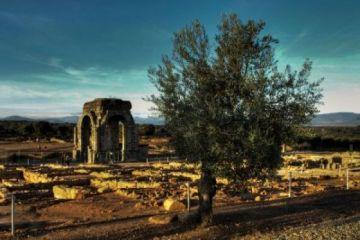 El olivo, testigo único de la historia de la Humanidad